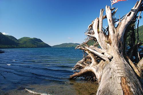 Nitinat Lake, looking West, Vancouver Island, British Columbia, Canada