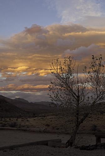 travel sunset tree tourism clouds landscape tour nevada sightseeing tourist noflash explore canon5d horsebackriding mojavedesert lasvegasnevada nearlasvegas besttravel redrrockcanyon ilobsterit