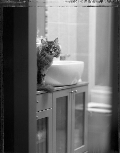 Pu the cat