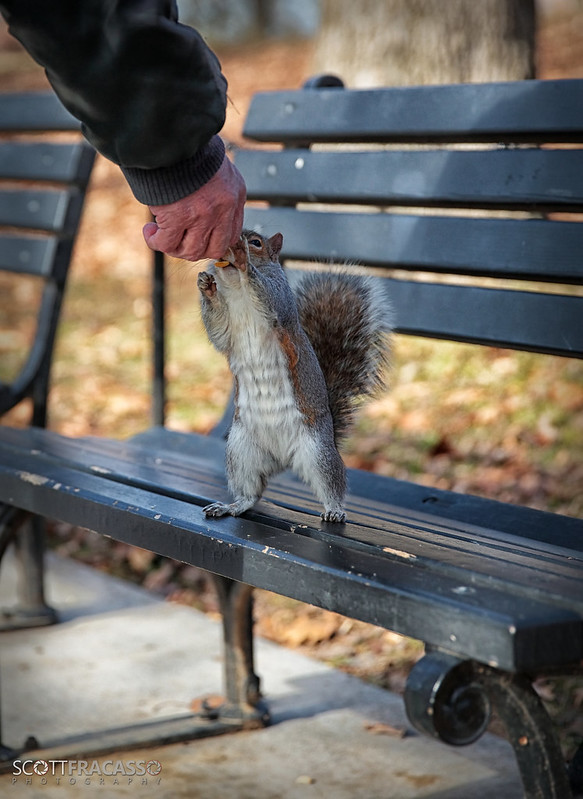 """I'm Just a Squirrel Trying To Get a Nut..."""