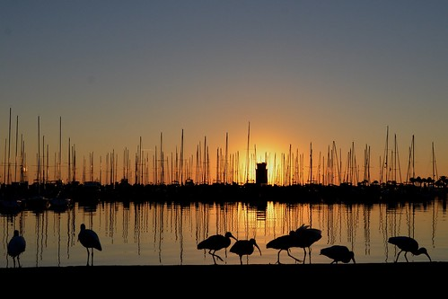 birds sunrise stpetersburg early florida ibid