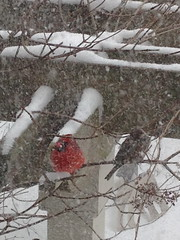 Birds in a snow storm