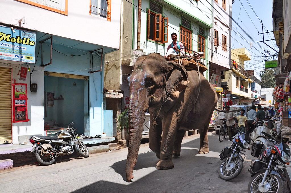 India - Rajasthan - Udaipur - Streetlife With Elefant - 121