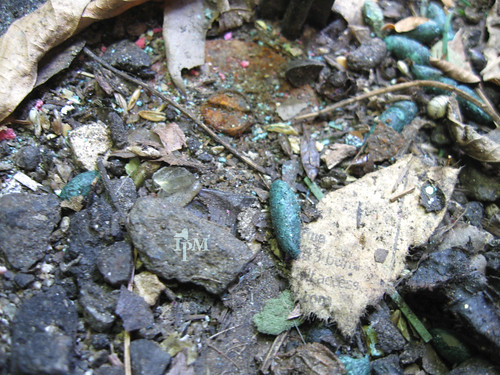 Photo shows lots of debris including small pieces of garbage, rocks, leaves and a green cigar-shaped rodent droppings.