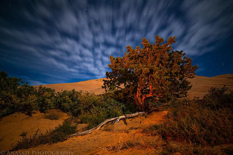 Sand Flats Tree