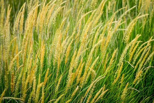 california park ca sky abstract nature grass us afternoon unitedstates outdoor sanjose historical recreational santaclaracountyparks martialcottlepark martialcottlefamilyranch