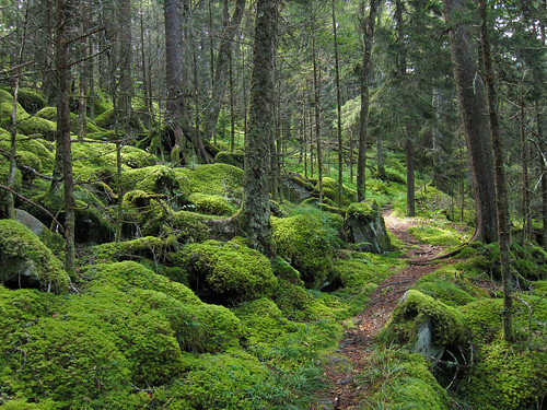 Forest_on_Baxter_Creek_Trail_in_Great_Smoky_Mountains_National_Park | by virgntn2011
