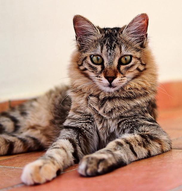 Hotel Cat (Olympus OMD EM5 & Panasonic 25mm F1.4 Prime)