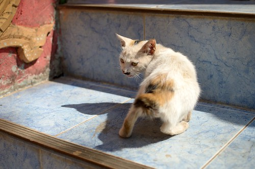 Cats in Pha That Luang, Vientiane, Laos | by hiroki.N