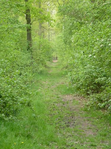Bos van Marpingen