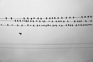 ***   by Misha Sokolnikov