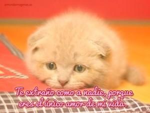 Frases Con Gatos Para Mi Novia Que Está Lejos Hola Mis Ami