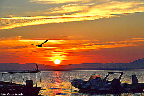 al mare il volo del gabbiano verso il sole