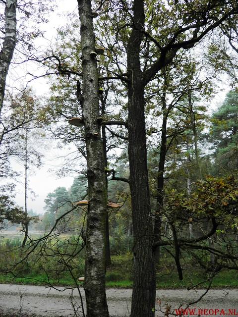 20-10-2012     Wedeblick-   Driebergen        25 Km (13)
