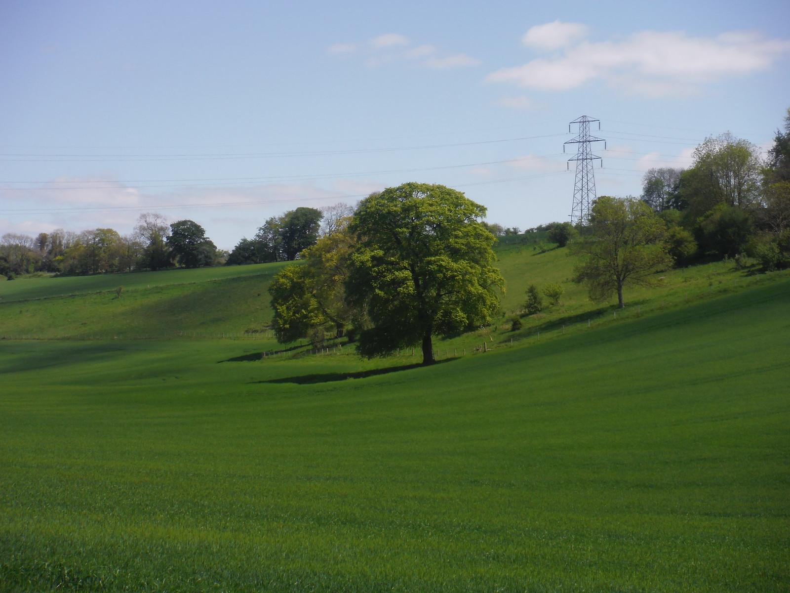 Tree in sloping field SWC Walk Rowlands Castle Circular