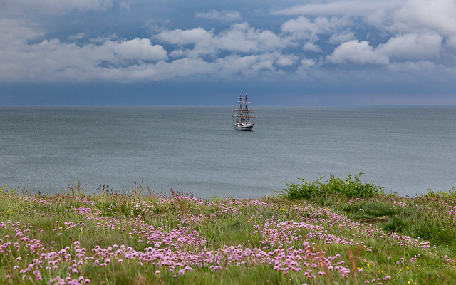 Tall Ship and Pink Thrift. IMG_6335