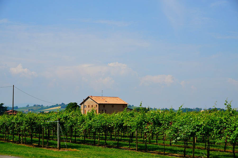 Vineyards dotting the landscape in Modena, Italy
