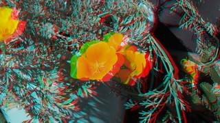 California Poppy in 3D | by Señor Danimal