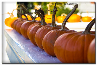 Baby Pumpkins sitting on the railing. | by Pentax K-x Connecticut Man