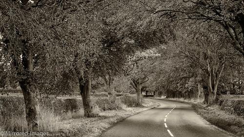 road trees monochrome sepia landscape mono codurham northeastengland silverefexpro
