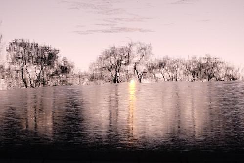 Tree Reflection [Explored January 3, 2017]
