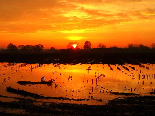 orange sunrise belgium antwerp zon ochtend oranje landschap zonsopgang oostmalle akker