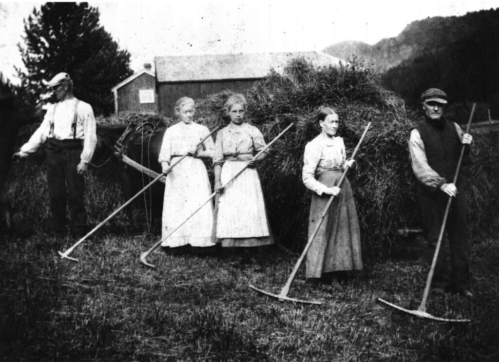 Høyonn i Vudduaunet (ca. 1905)