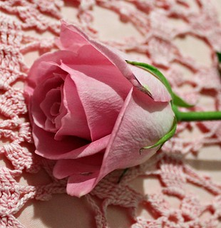 A Single Rose | by YourCastlesDecor