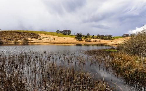 trees sky lake water pool clouds reeds pond somerset hills priddy mendips