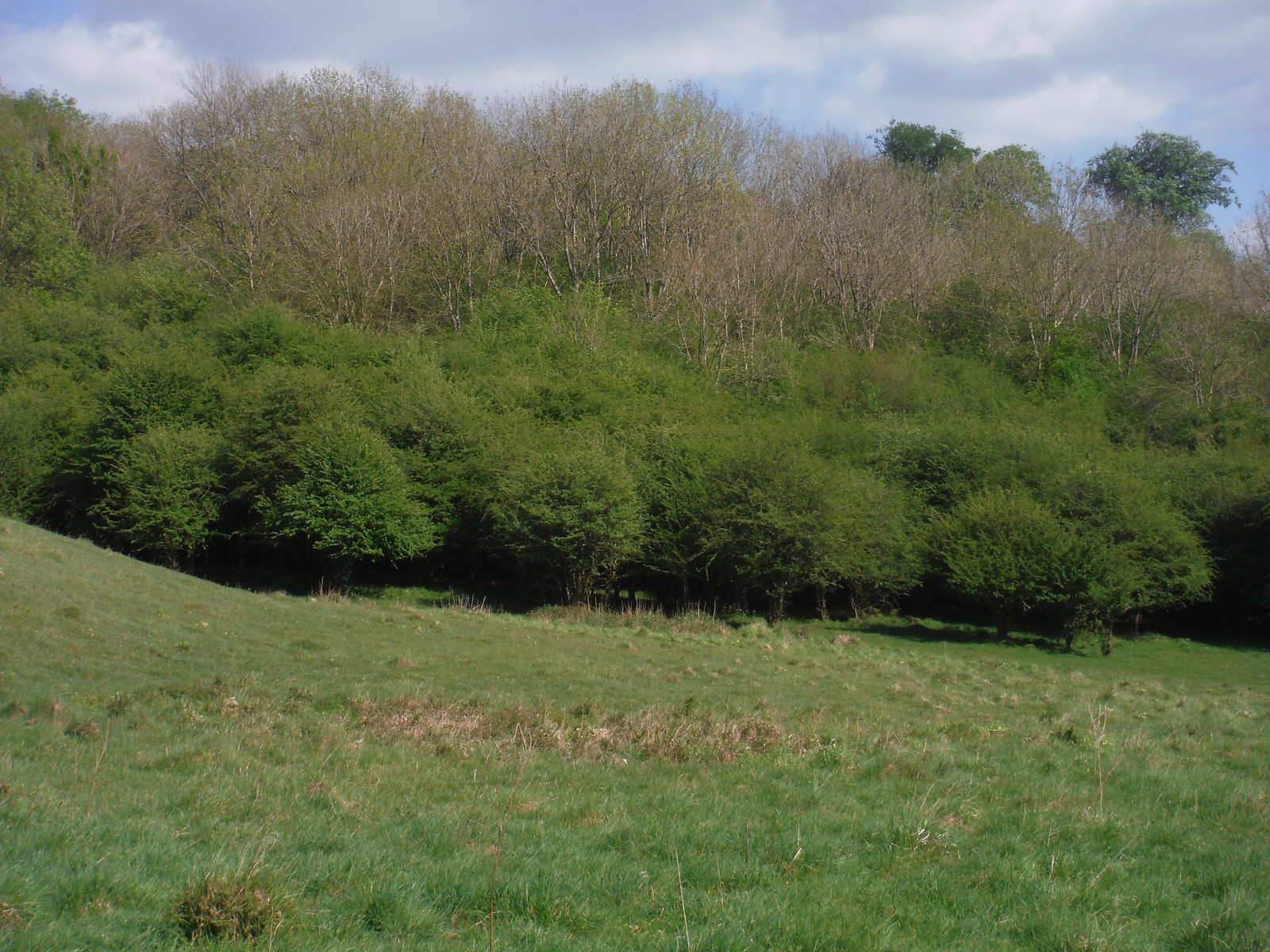 Trees in Bramshott Bottom SWC Walk Rowlands Castle Circular - Extension