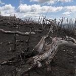 Burn on Otokomi Mountain