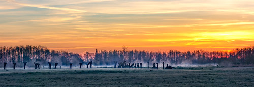 trees winter misty fog sunrise frost mystical pollard hss sundawn middendelfland coppicedwood sliderssunday