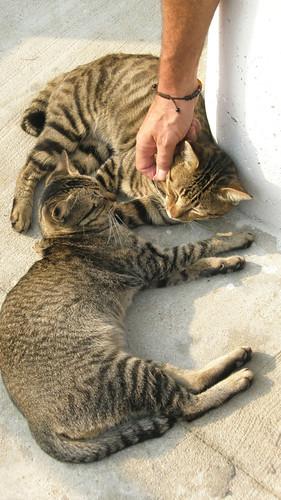Lamma Island: Cats on the Beach