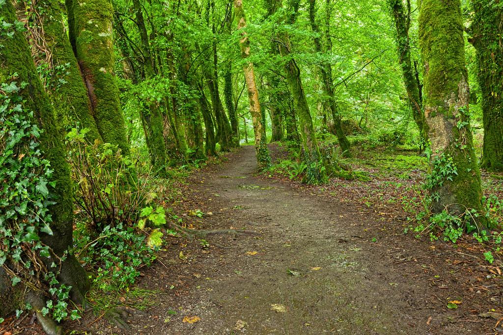 Killarney Forest Trail