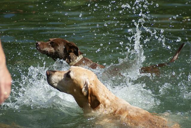 Walk Your Dog Austin's Dachshund Race