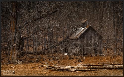 old tree abandoned nature landscape nikon chapel capelle d7000 dtailvision