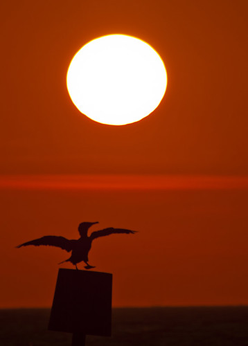 sea sun wings leg cormorant groyne mudeford