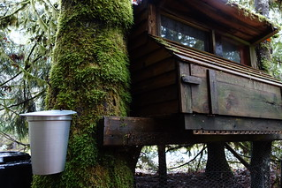 Maple Bucket & Treehouse Chicken Coop | by Heath & the B.L.T. boys