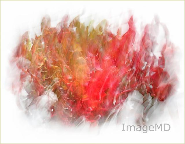 Croton Flames