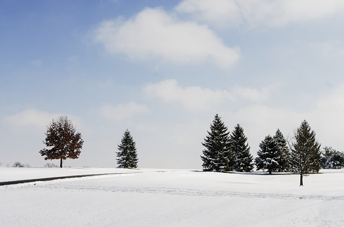 jacobsonpark kentucky lexington outdoors clouds cold frozen hill ice landscape sky snow snowy tree winter unitedstates day digital