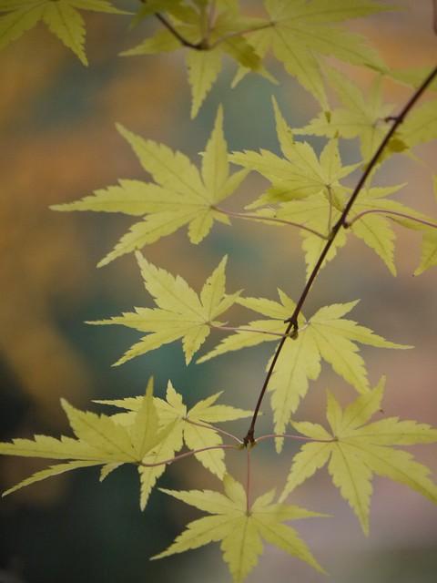 火, 2013-11-05 13:15 - Colors of Autumn at Brooklyn Botanical Garden