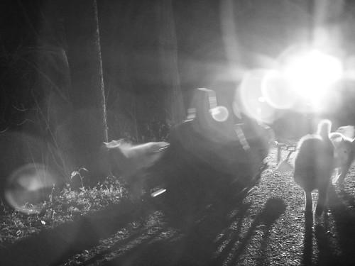 WooFPAK In A Speed Blur   by woofdriver