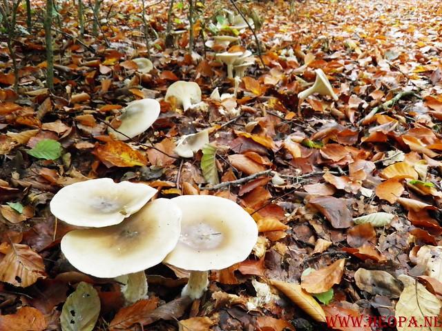 20-10-2012     Wedeblick-   Driebergen        25 Km (170)