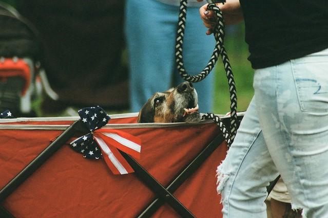 wagon dog