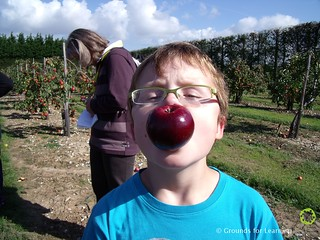 School Orchard08GfLScotland