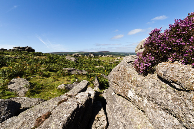Moorland strewn with rocks and capped in heather