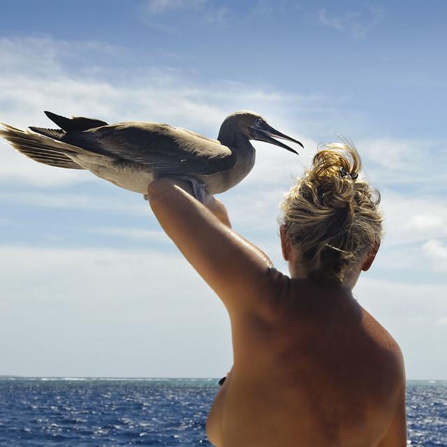 A bird in the hand ....... ships log