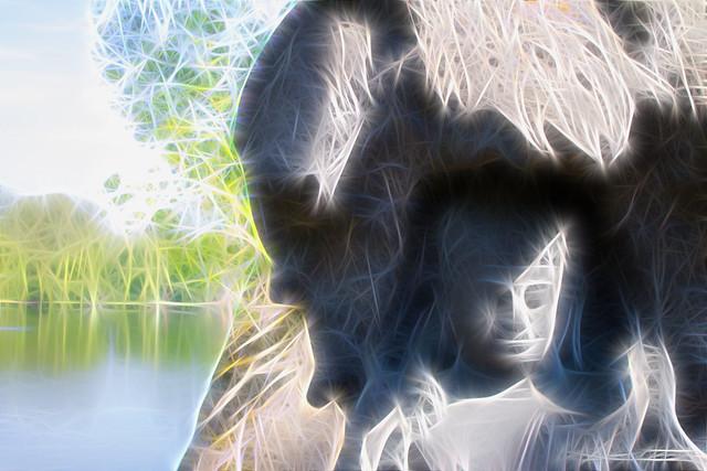 Bouddha: The light Man