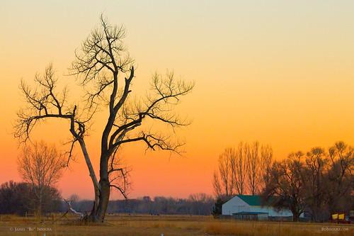 travel trees winter sky orange tree nature season landscape scenery colorado view artgallery dusk country scenic sunsets sunrises cottonwoodtree bouldercounty jamesboinsogna