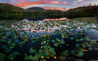 Lilies at sunset